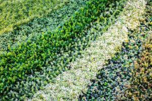 Porównanie trawy syntetycznej z innymi nawierzchniami